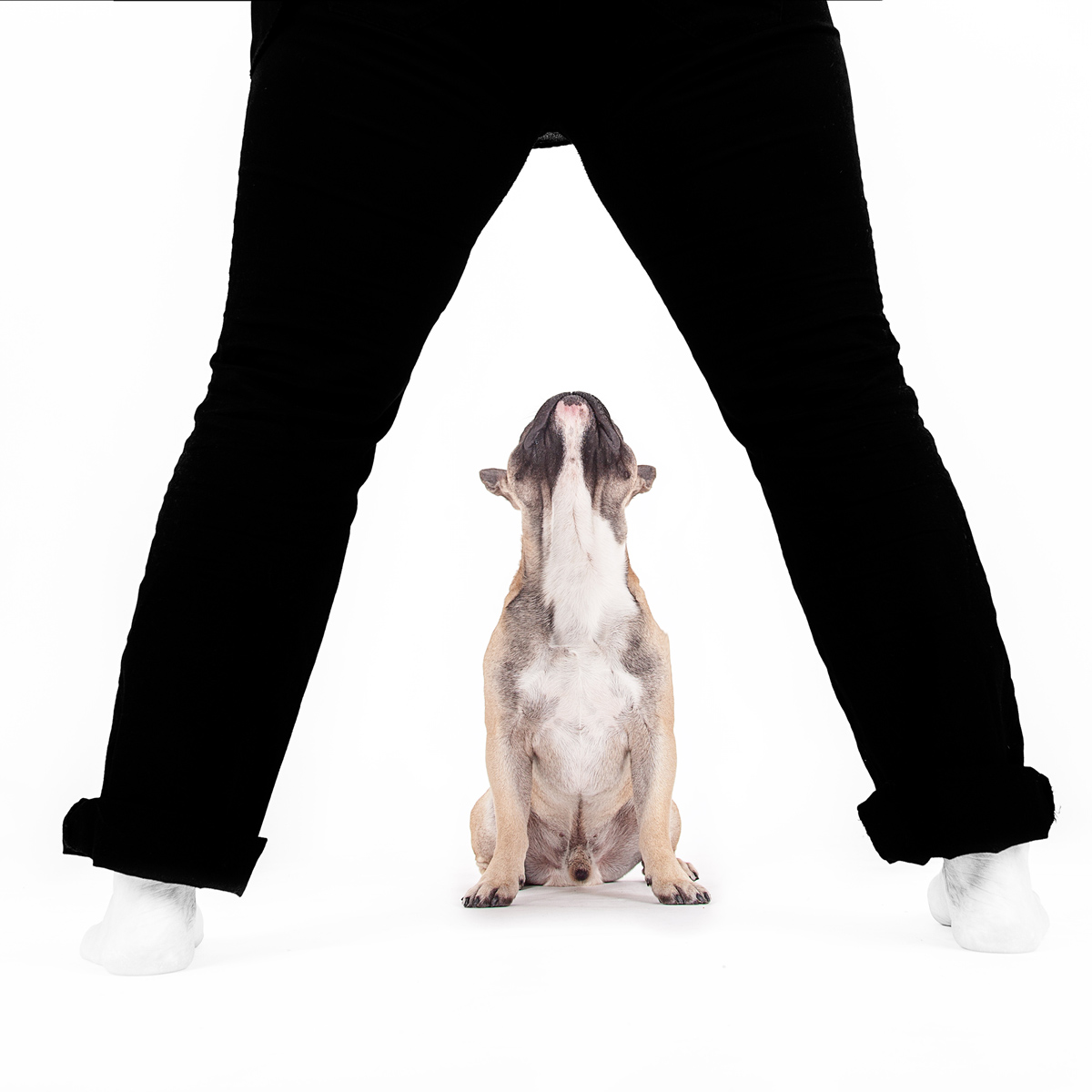 hundeshooting-fotograf-hund-bielefled